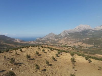 Birdwatching en el estrecho de Gibraltar