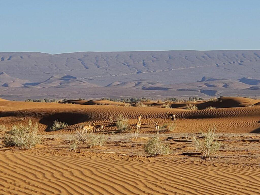 desiertos en Marruecos Zagora Unik maroc Tours