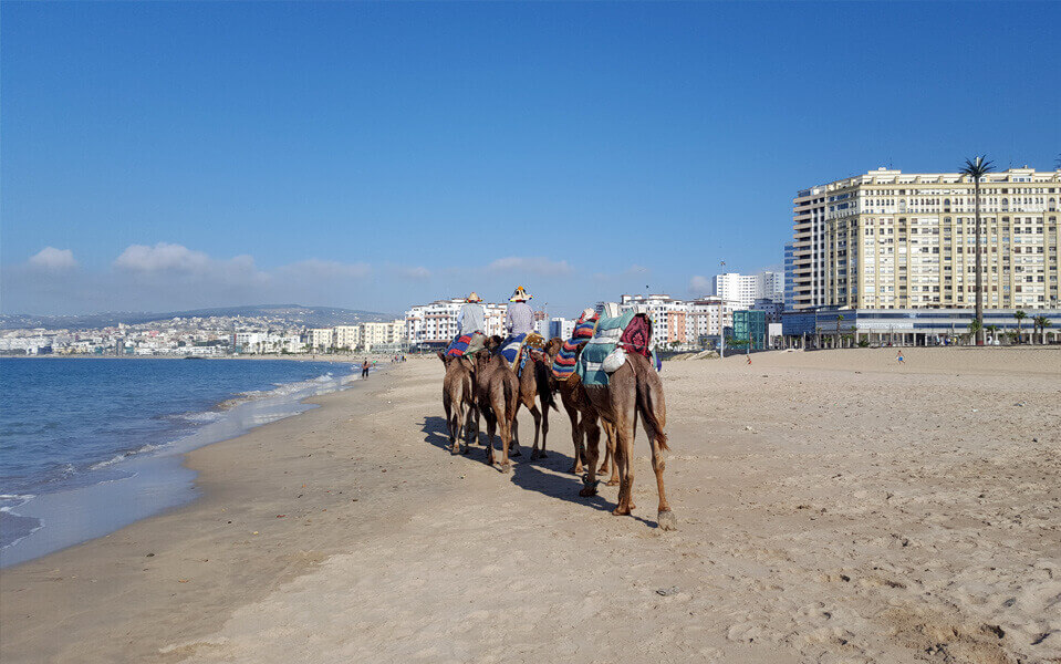 camels tangier beach